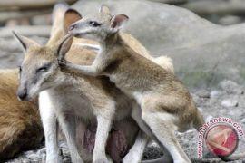 BKSDA Kalbar proses hukum 12 orang penyelundup hewan dilindungi