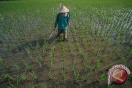 Bangka Selatan Cetak 3.800 Hektare Sawah