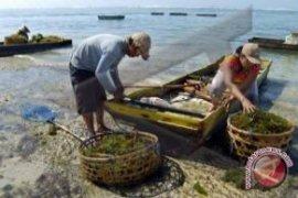 Diskanlut: Setengah Petani Rumput Laut Beralih Profesi
