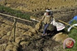 Bupati Klungkung Jamin Tidak Ada Penggusuran Petani Garam