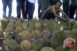 Bangka Barat gelar kontes durian