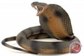 Teka-teki Evolusi Tentang Ular Kehilangan Kaki