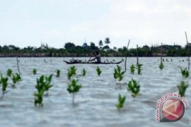 Ratusan Hektare Hutan Bakau Bangka Tengah Tempat Budi Daya Kepiting