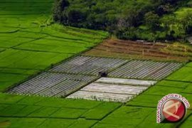 Bangka Selatan Cetak 3.000 Hektare Sawah