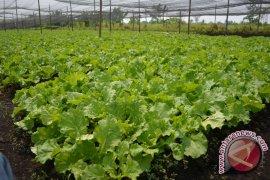 Pontianak Pertahankan 30 Persen Lahan Untuk Pertanian