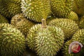 Durian Asal Sulbar Laku Keras Di Gorontalo