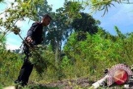 Indonesia Komitmen Tolak Legalisasi Ganja