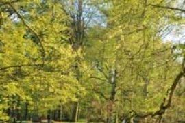 Taman Keukenhof di Belanda yang Termasyur di Seluruh Dunia akan Dibuka pada Tanggal 21 Maret