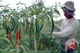 "BI Dorong Masyarakat Kota Genjarkan ""Urban Farming"""