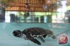 Petugas gagalkan penyelundupan kura-kura di Bandara Soetta