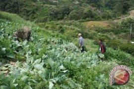 Babel gerakkan Ibu Rumah Tangga tanam sayuran