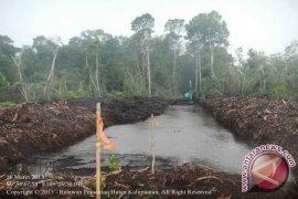 LSM Desak APP Komitmen Lakukan Konservasi Hutan