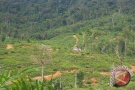 Polisi tetapkan tersangka pembakar lahan dalam hutan