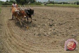Bangka Tengah Sediakan Lima Hektare Lahan Kopi