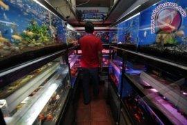 Peluang Ekspor Ikan Hias