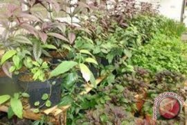 Ilmuwan Temukan Cara Tanaman atau Tumbuhan-tumbuhan Berkomunikasi