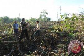 Mangrove Dibabat