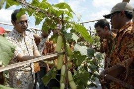 Ewindo Bantu Bibit Sayuran Untuk Petani Timika