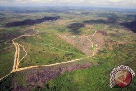 Kerusakan Hutan Tesso Nilo