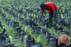 3.918 Karyawan Perusahaan Sawit Belum Terdaftar BPJS Ketenagakerjaan
