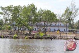 Komunitas mangrove hijaukan dua anak sungai