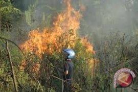Pemkab Akan Terbitkan Perda Larangan Bakar Hutan