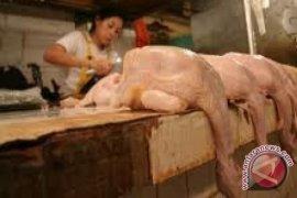 Stok Berlimpah Harga Ayam Di Pontianak Normal