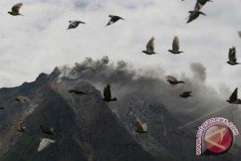Gunung Sinabung meletus harga sayuran naik