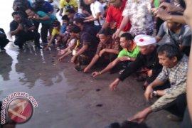 Puluhan Wisman di Buleleng Ikuti Pelepasan Tukik