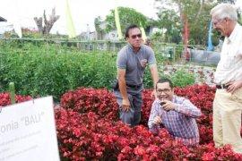 Cap Panah Merah Luncurkan Benih Bunga Begonia