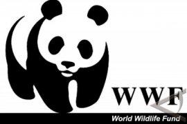 Kata WWF Soal Kondisi Laut Kita