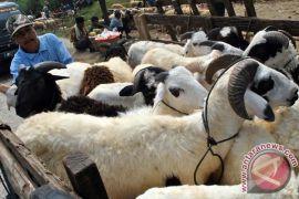 Pemotongan hewan kurban pada Idul Adha 2020 di Kota Bogor terapkan protokol kesehatan