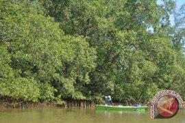 Mahasiswa Universitas Kobe Jepang Teliti Mangrove Ke Indonesia