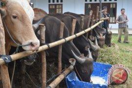 Disnakan Rejanglebong pantau penjualan hewan kurban