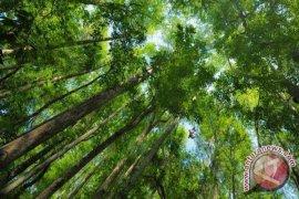 Pengelolaan Hutan Desa Di Bengkulu Terbaik Nasional