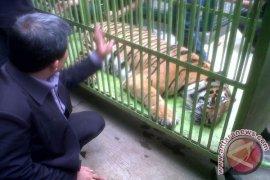Tim kesehatan temukan selang dari kotoran harimau