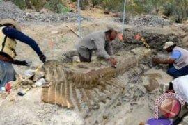 Jejak Kaki Dinosaurus Besar Ditemukan di Bolivia