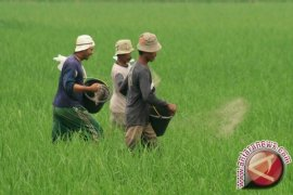 Kalbar Target Surplus Berkelanjutan Lima Bahan Pokok