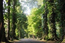 Kebun Raya Bogor tebang sejumlah pohon rawan