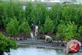 Parah, 30.500 Hektare Hutan Bakau Jabar Rusak