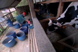 Dukungan Infrastruktur Mampu Sukseskan Swasembada Daging Sapi