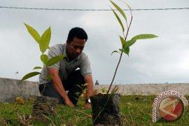 PLN Bogor tanam pohon reboisasi bantaran Ciliwung