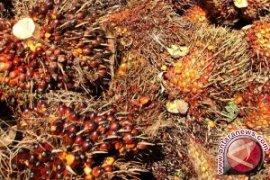 Harga Sawit di Nagan Raya Naik Rp2.000/kg