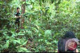 Menteri LHK Tinjau Hutan Lindung Tebing Siring