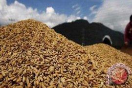 Petani Abdya kecewa hasil panen belum terjual