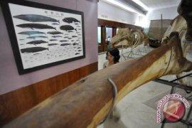 Museum Siwalima Ambon gelar lomba pemandu museum