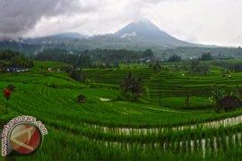 Pengembangan Ekowisata Wilayah Subak Mampu Sejahterakan Petani