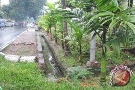 Masyarakat Pecinta Pohon Tanam Ribuan Pinang