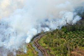 Menkokesra Minta Tangkap Pembakar Hutan Modus Lama