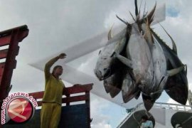 Ekspor ikan tuna Bali naik 75,7 persen